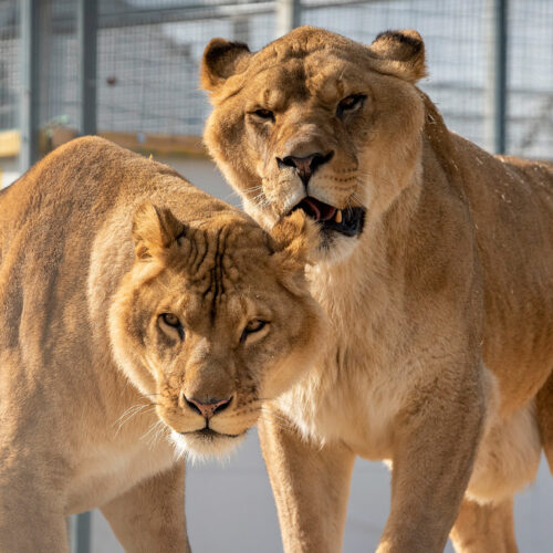 Leo et Zampa La Taniere