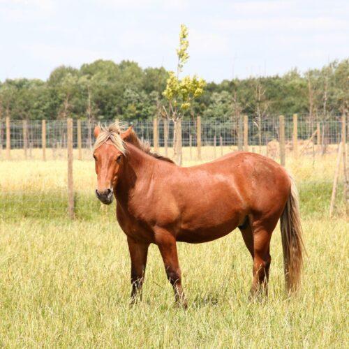 Valentin_cheval_la_taniere