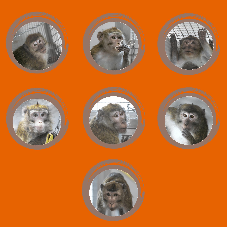 primates laboratoire