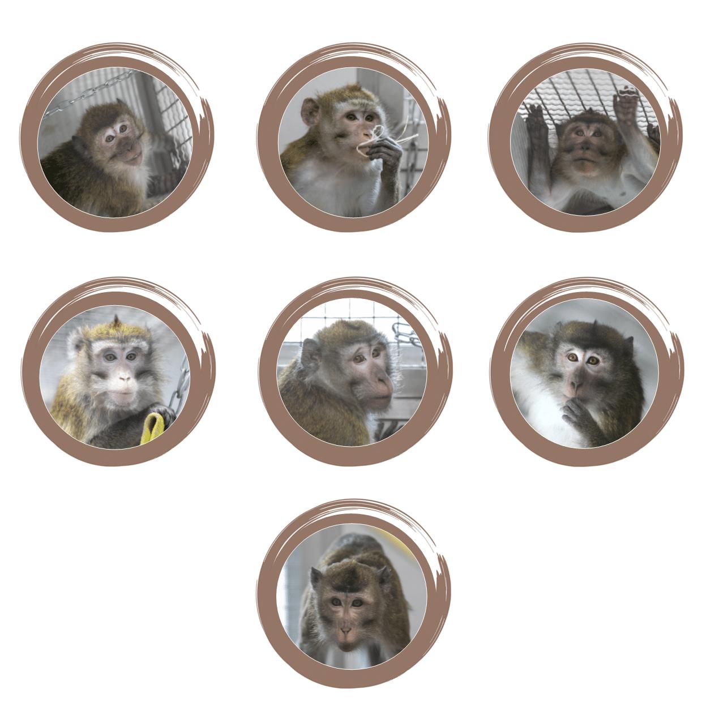 primates de laboratoire