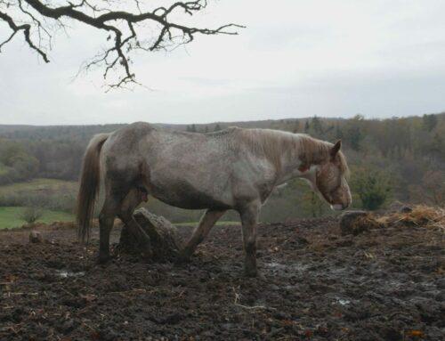 Le zoo-refuge sauve de nouveau trente-cinq chevaux