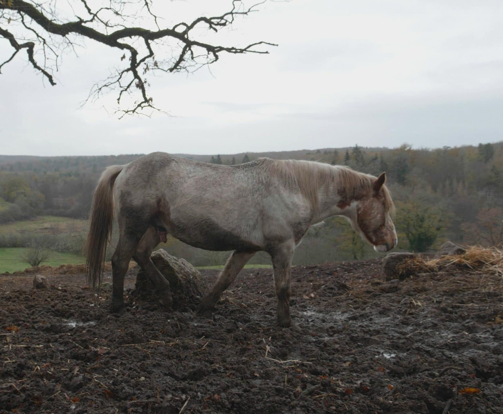 Sauvetage 35 chevaux La Taniere